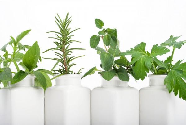 Zasadź zioła w donicach!