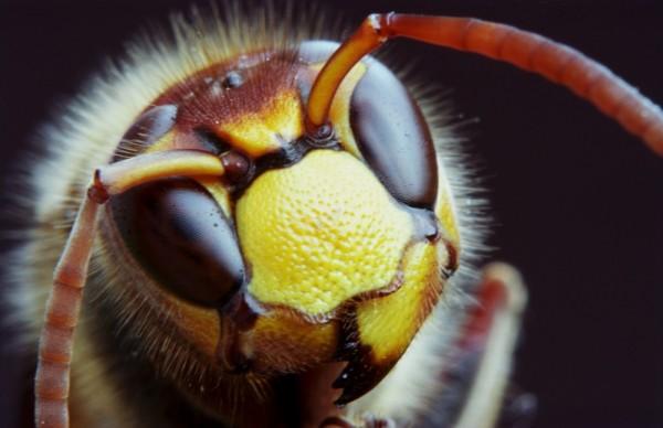 Pszczoły to jedne z najbardziej pożytecznych zwierząt na Ziemi/fot. Fotolia